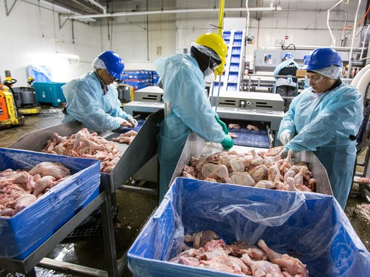 Workers sort chicken legs into left and right legs to enter the deboning machine at Allen Harim processing plant in Harbeson.