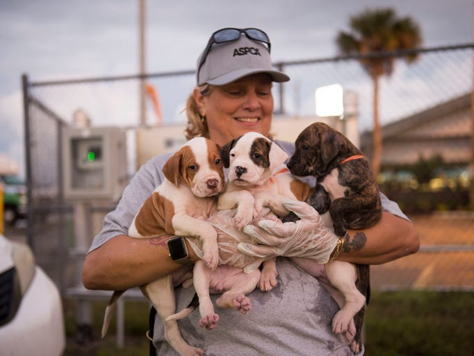 Kelly Koch, a volunteer from Vero Beach, comforts four