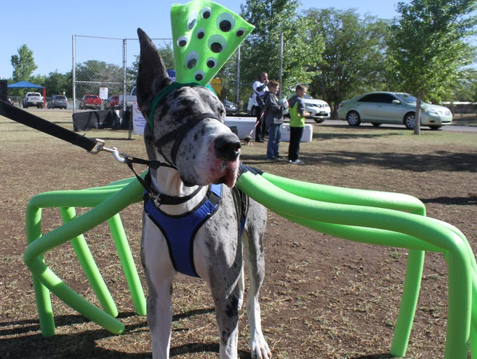 Astro, a one-year-old Great Dane, was the largest dog