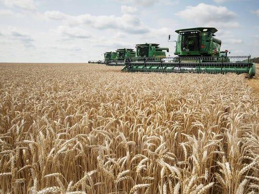 BHM wheat