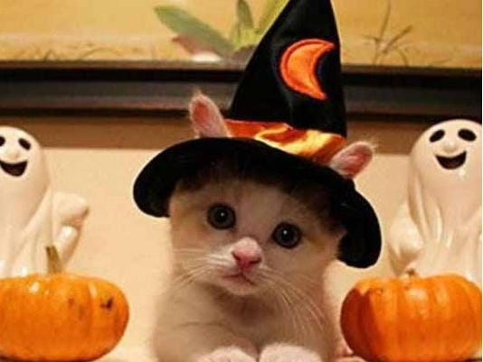 kitty in witch's hat.png
