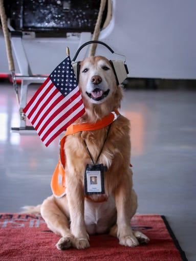Sadie, Innisfree Jet Center's aviation canine and mascot,