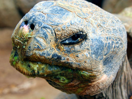 Ralph the Tortoise