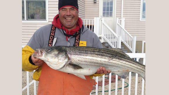 Captain Fran Verdi with an early season striped bass that he caught last year.