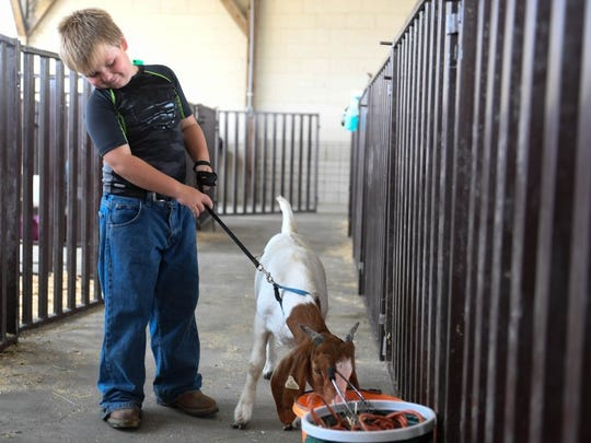 MIKE LAWRENCE / THE GLEANER Alex Roberts, 7 years-old, tries to keep his goat Brad out of mischief as he prepares to show him at the Henderson County Fair Goat Show Monday, July 25, 2016.