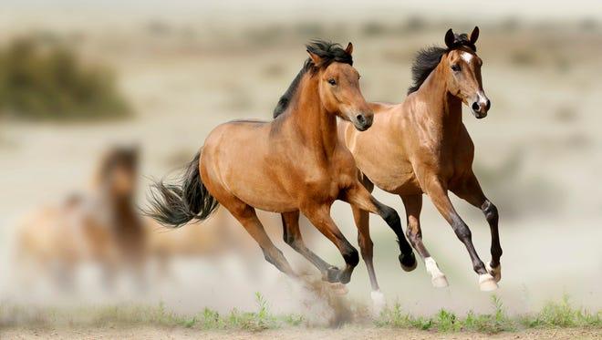 Horses in prairies.