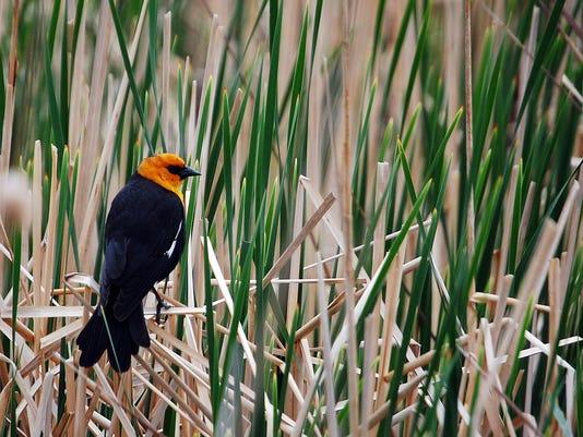 Bird in the weeds-2.jpg