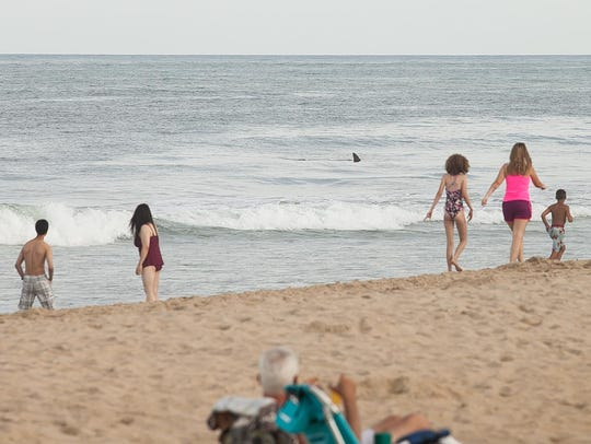 Beachgoers peer out at the ocean on June 24 as a hammerhead