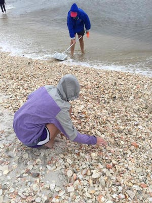 Seashell hunters take advantage of the thousands and thousands of shells washed up onto shore on Navarre Beach.