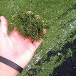 Some experts believe that the crumb rubber used in turf fields leads to serious injuries.