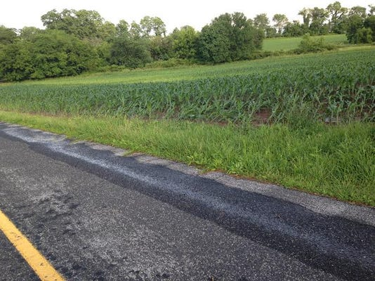 Rows of corn plants lean back about 45 degrees outside a Mount Pleasant Township home after Thursday's thunderstorms.