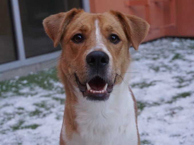 Styx is a 1-year-old shepherd mix. She is playful and