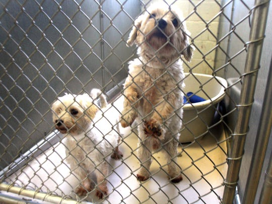 Gov. Christie has vetoed a bill that would prohibit the puppy mill industry from doing business in New Jersey.
