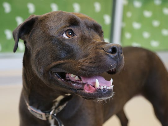 Angel, a 5 year old female dog up for adoption at the