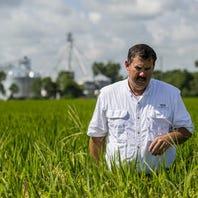 Rice deal boosts Louisiana farmers