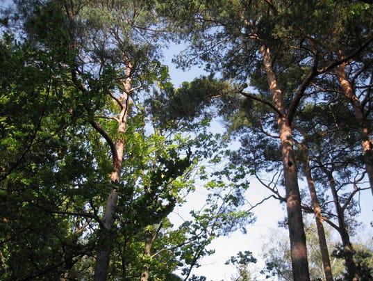 635792122355963032-trees