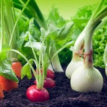 10 steps for a successful vegetable garden