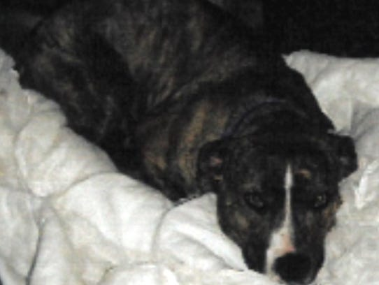 Pretty Girl is a 1-year-old, spayed, female pit bull