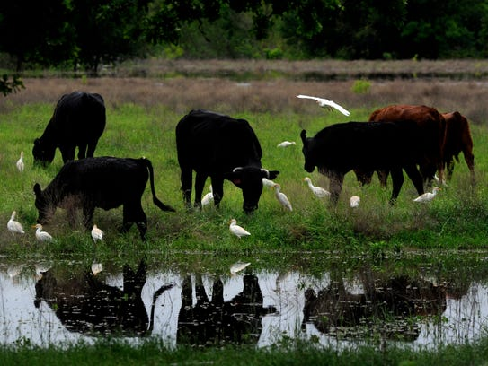Cattle inventories are up in Texas according to the