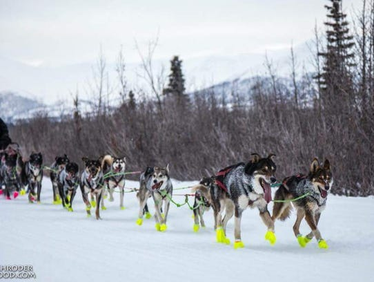 Emily Maxwell of Iowa City leads her sled dogs on the