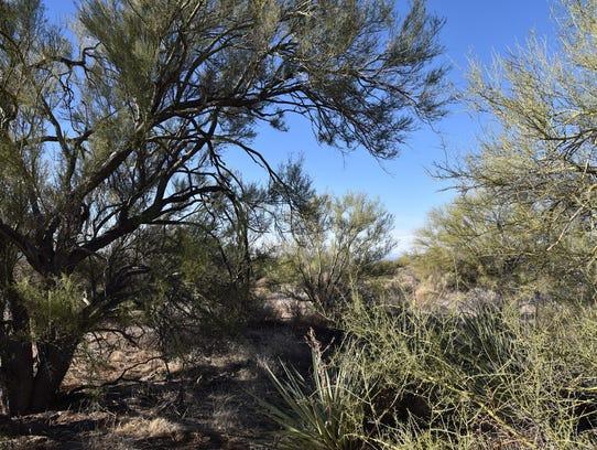 Abundant desert greenery flanks suburbia along the