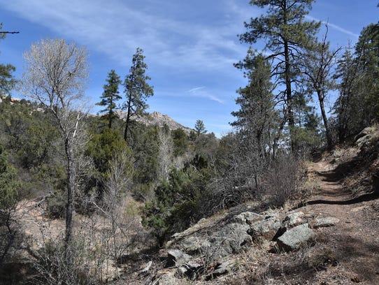 Riparian corridor on Clark Spring Trail.