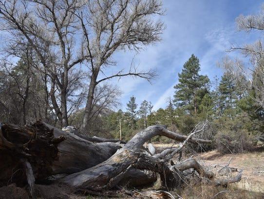 A tumbledown drainage area on the Granite Mountain