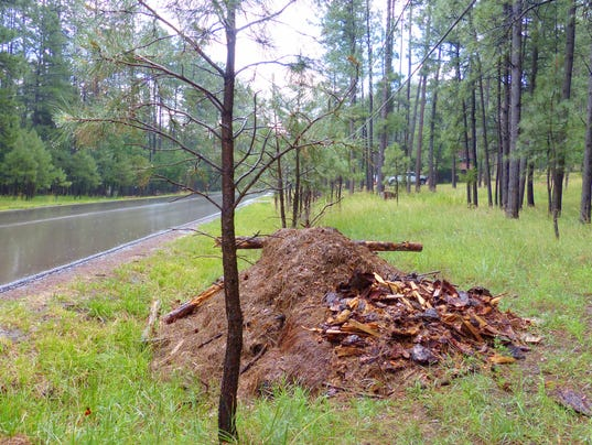 pile of slash on Cedar Creek Road lot