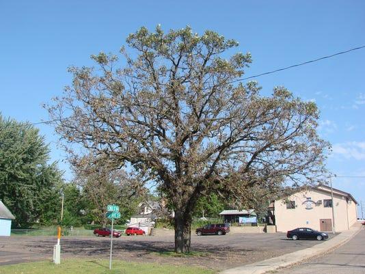 BOB.tree-101315