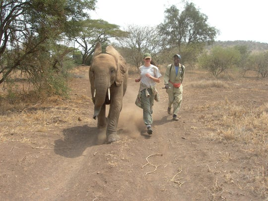 Katie Ommanney, back when she was 16, has a footrace with Enkarsis, a female elephant.