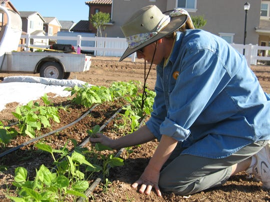 A worker tends to greens that could be sold at the