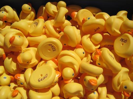 Mesquite Chamber of Commerce purchased 500 rubber ducks