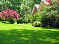 Consider light conditions to select the best turfgrass for your yard