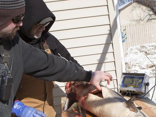 DNR Fish Technician Ryan Zernzach checks the gender