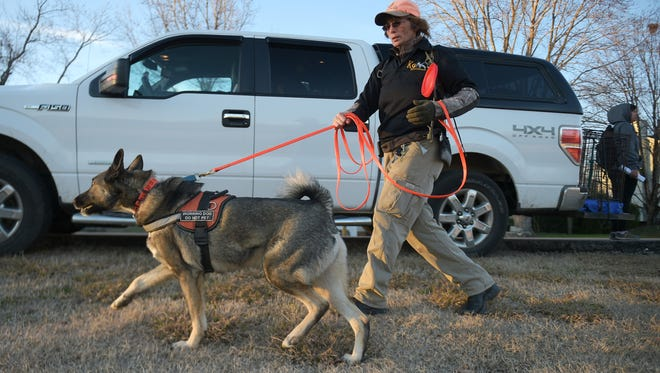 Lost Pet Professionals investigator Angie Rutherford from Arkansas and her search dog, Nico, look for Kaylee at Forrest Crossing golf course in Franklin on Monday, Jan. 30, 2017.