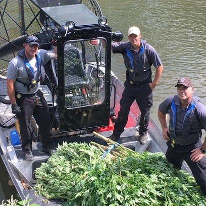 Police discovered an island of marijuana on Sept. 15.