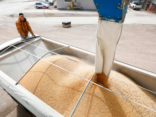 Terry Morrison of Earlham, Iowa, watches as soybeans