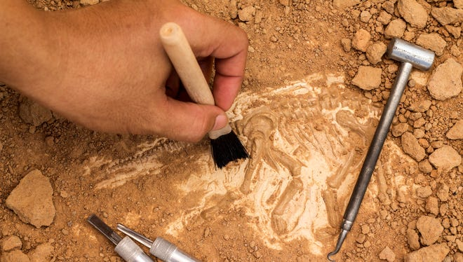 A new species of dinosaur has been discovered by a paleontologist at the New Mexico Museum of Natural History and Science.