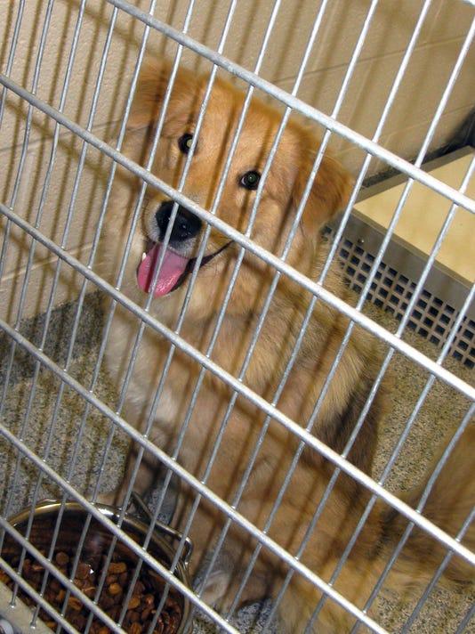 635792165025078746-shelter-AP-Pets-Shelter-Music-LA401