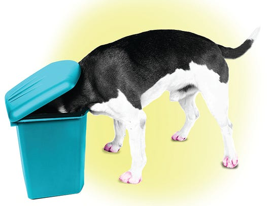 If getting into the garbage is your pups No. 1 hobby,
