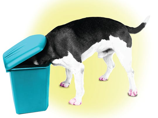 Do's and don'ts of leaving dogs on their own