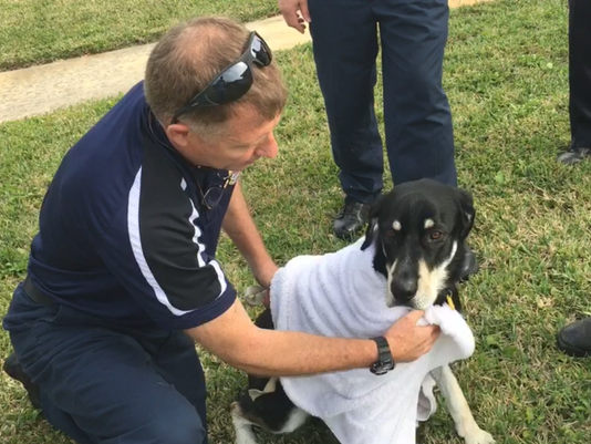 """Bear"" rescue in Satellite Beach"