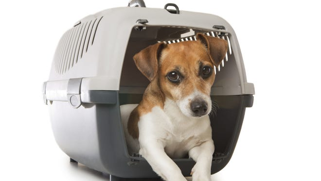 Dogs enjoy dens, like crates, they just don't like when you leave home.