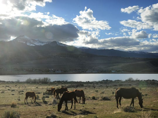 With overpopulation looming, Nevada revives wild horse birth