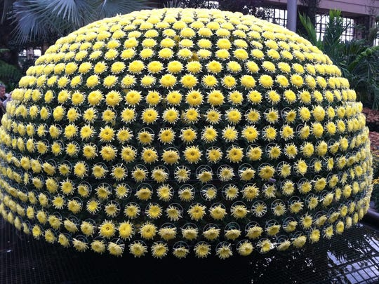 The Thousand Bloom Chrysanthemum is part of the annual