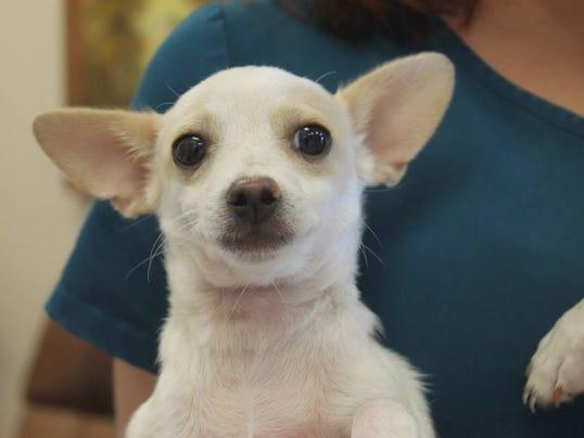 Fort Collins Dog Adoption Event