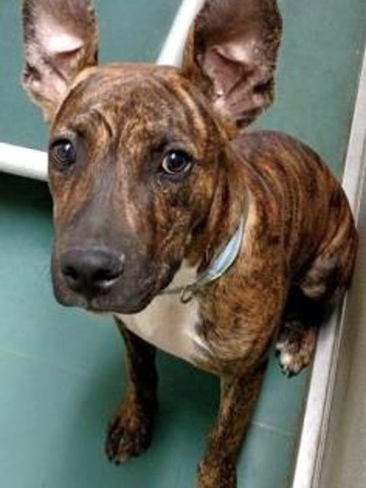 Sept. 30 Pet of the Day