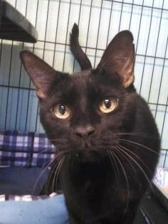 Pet of the Day: Dracula