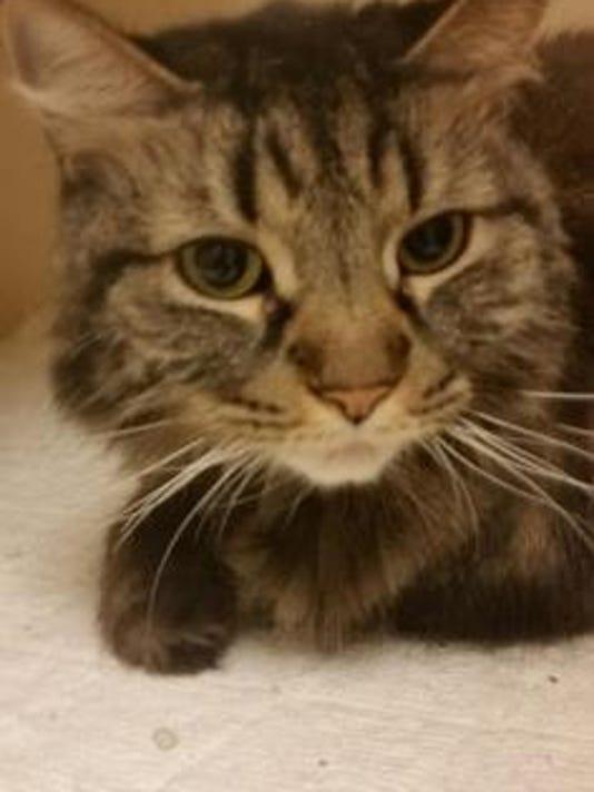 636251020431180157-kitty-1.jpg