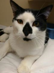 Just look at my interesting face -- don't you want to take me home? Ask for Stetson.